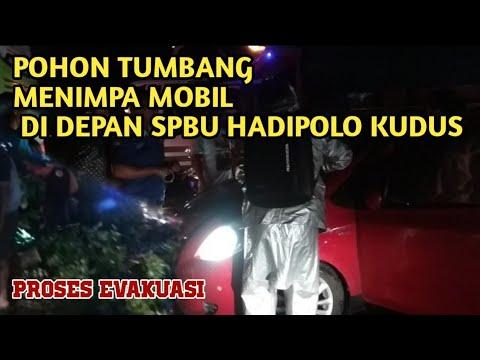 POHON TUMBANG MENIMPA MOBIL DI DEPAN SPBU HADIPOLO ( KUDUS)