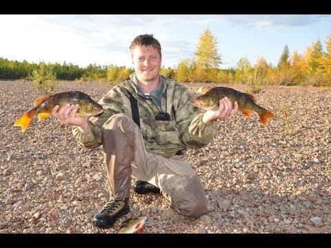 видео: Горячее копчение рыбы (килограммовые окуни) в походных условиях