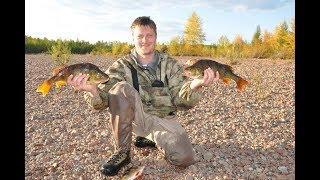 Горячее копчение рыбы (килограммовые окуни) в походных условиях