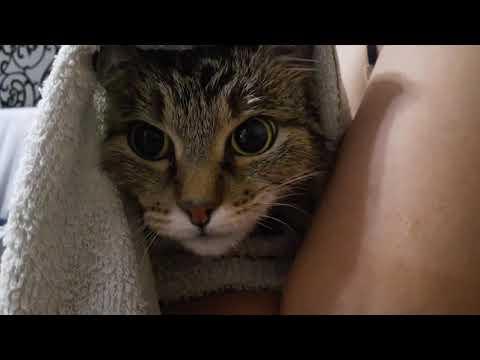 Если ты хороший котик