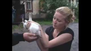 Жесть  Узбек изнасиловал котёнка!