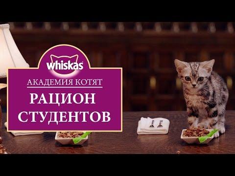 Эпизод 6. Рацион котенка: правильное питание. Студенческая столовая. Академия котят