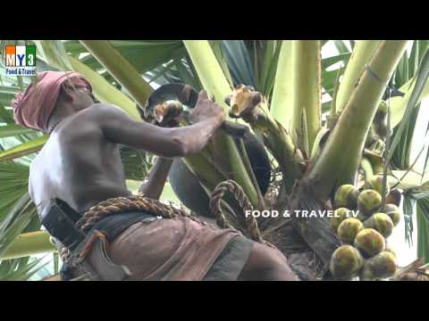 AWESOME VIDEOS !!!!  Toddy MAN !!!!!  palm Tree Climber | FOOD & TRAVEL TV