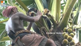awesome videos toddy man palm tree climber food travel tv