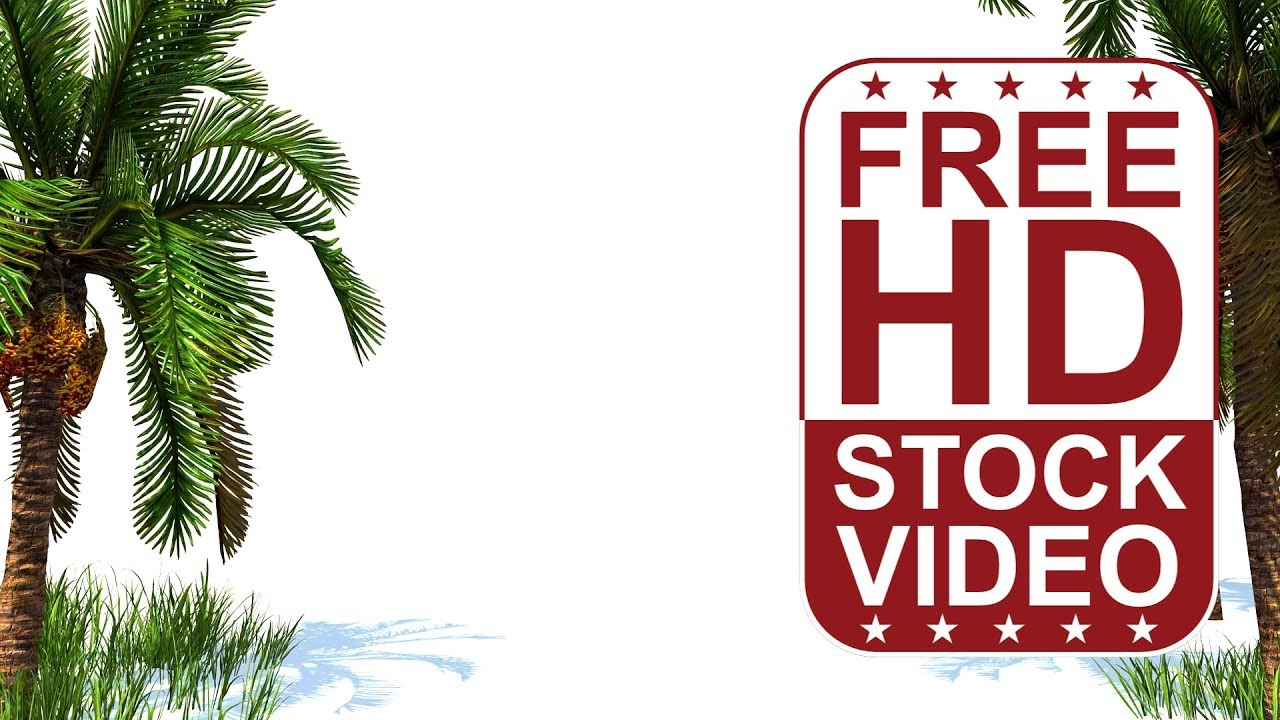 free hd video backgrounds 3d animated date palm tree and grass