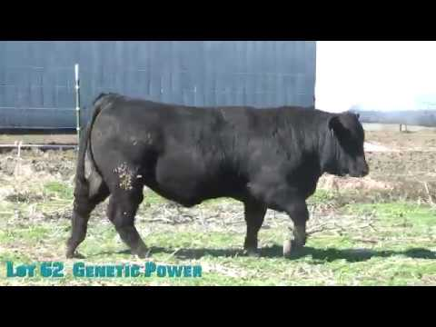Lot 62  Genetic Power