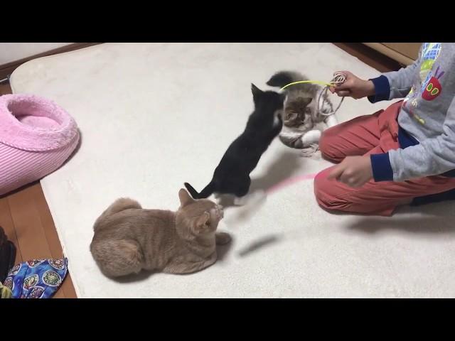 子猫たちと遊ぶ息子のほのぼのとした光景