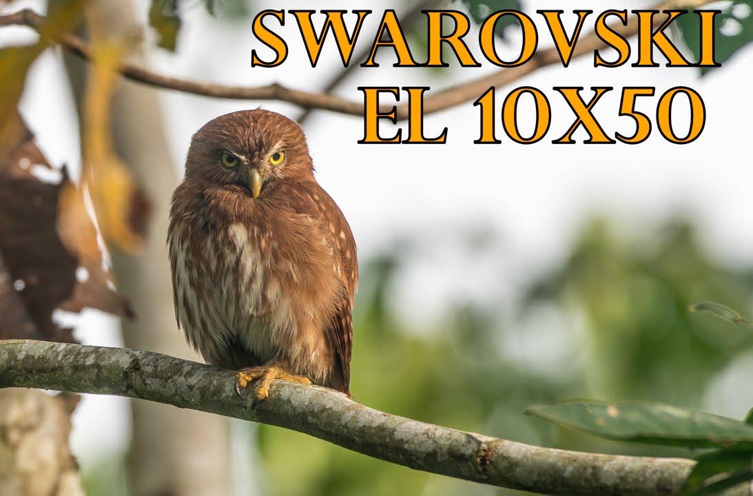 Swarovski EL 10x50 vs  Zeiss & Leica