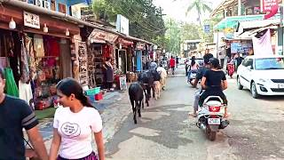 Palolem Beach Goa | What Is So Beautiful About Palolem Beach | Why Tourists Rush To Palolem Beach