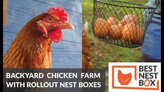 Backyard Chicken Farming for the First Time - Best Nest Box