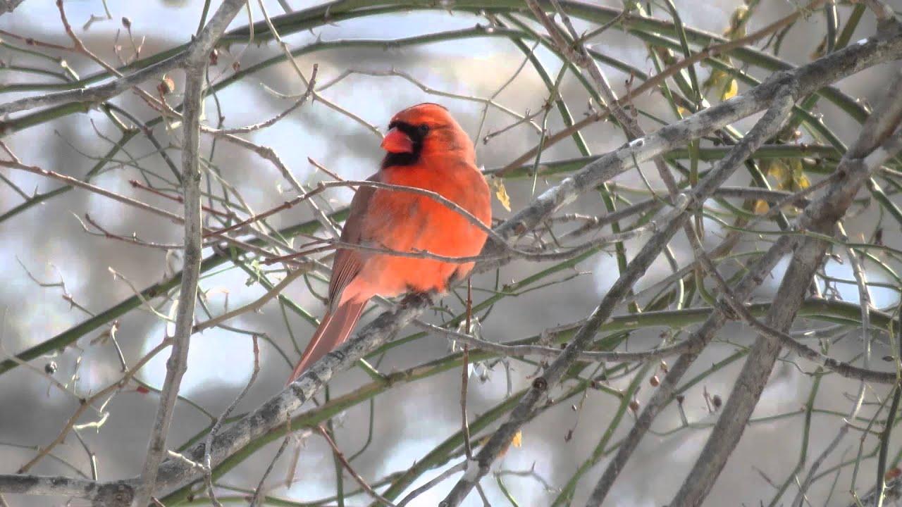 Winter Backyard Birds : Backyard Winter Birds ~ 2015  YouTube