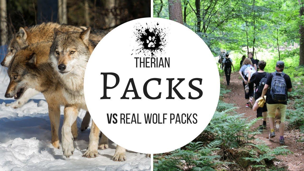 Create A Wolf Pack