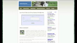 Keeshond Informational Website - A Lot Of Information About Keeshond Dogs