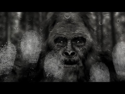 """FOR YOU NON-BELIEVERS IN REAL SASQUATCH!! - This Is A MUST Watch """"REAL LIFE BIGFOOT"""" Documentary!!"""