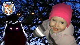 Смешные кошки на дереве. Светятся глаза у кошек. Играем с кошками.