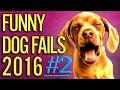 Best Vines Compilation 2017   Funny Dog Fails 2016 PART #2 Dog / Pets Fails Compilation