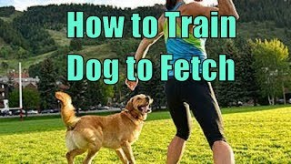 How to Train a Dog to Fetch and Retrieve - Dog Obedience Training , Canine