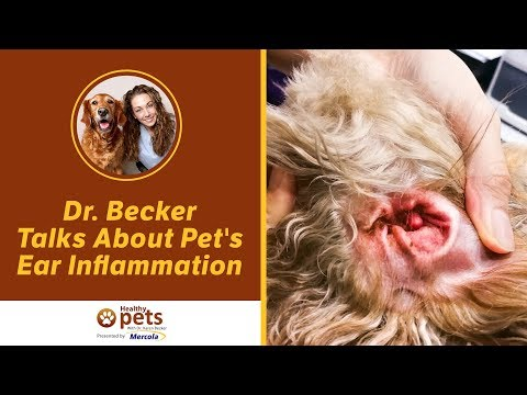 Dr. Becker Talks About Pet's Ear Inflammation