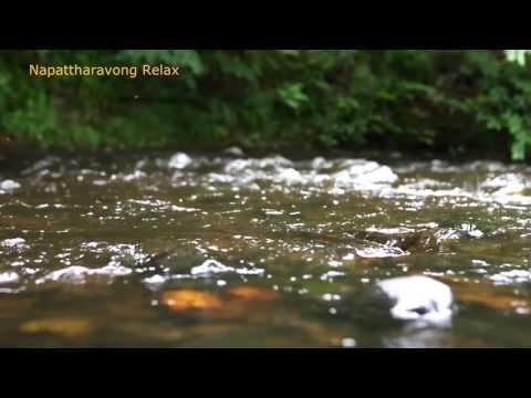 ธรรมชาติ คลายเครียด เสียงน้ำไหล Nature sounds 6