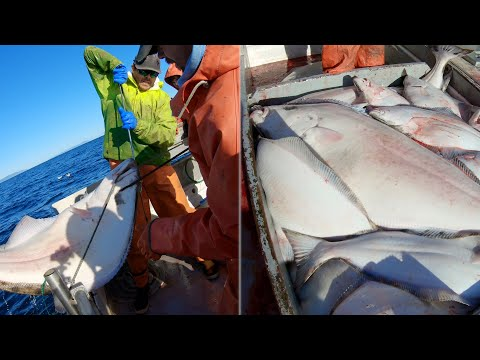 Here Comes A Big One! - Alaska Halibut Longlining