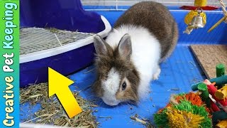 HOW TO litter train your rabbit in one week | Bunny Potty Training