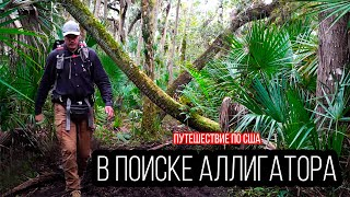 Миссия: поймать аллигатора   Штат Флорида   Путешествие по США   #6