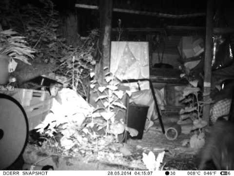 2014 05 28 Waschbären-Randale in der Nacht