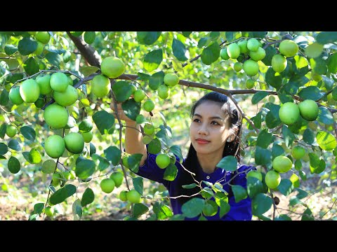 Cooking jujube fruit with salt in my homeland - Polin Lifestyle