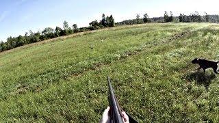 Охота на дупеля с дратхааром