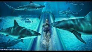 ATRAVESANDO TIBURONES. Aquaventure. Tobogan Maya. Las mejores atracciones thumbnail