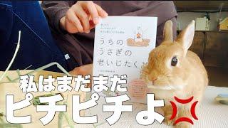 ウサギの老後の事が詳しく学べる本を買ったら、まだそんな歳じゃないと怒られました #828