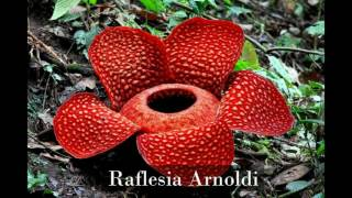 Download Mp3 Flora Dan Fauna Di Indonesia