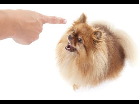 How to Stop a Dog from Barking