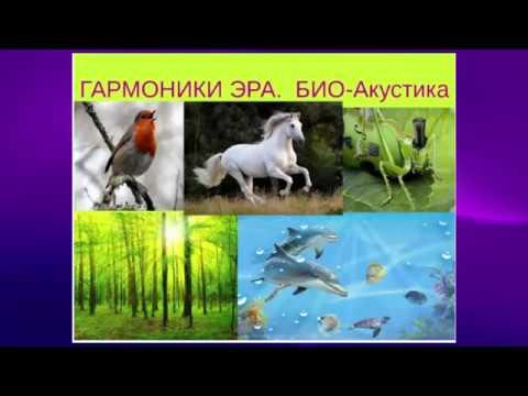 Презентация Проекта ЭРА Эльмира Скиба