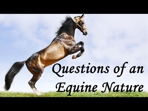 Questions Of An Equine Nature