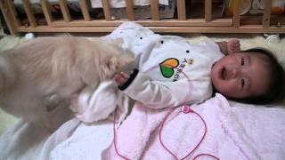 赤ちゃんにあげたおやつが惜しくなった犬 thumbnail