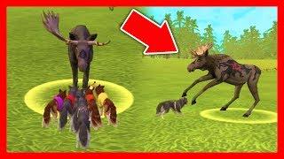 СИМУЛЯТОР ВОЛКА #41 КАБАН и ЗАЙЦЫ Жизни Зверей WildCraft про волков лис рысей ДЕТСКИЕ ИГРЫ