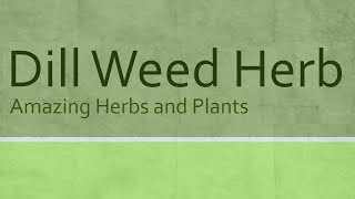 Dill Weed Herb Heath Benefits - Health Benefits of Dill Weed - Amazing Herbs and Plants