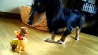 マクドナルドの景品の、ネジで動くおもちゃが怖い愛犬ちょびです。