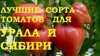 Лучшие сорта томатов для Урала и Сибири.(Лучшие сорта для выращивания томатов для теплицы., 2016-12-20T17:50:39.000Z)