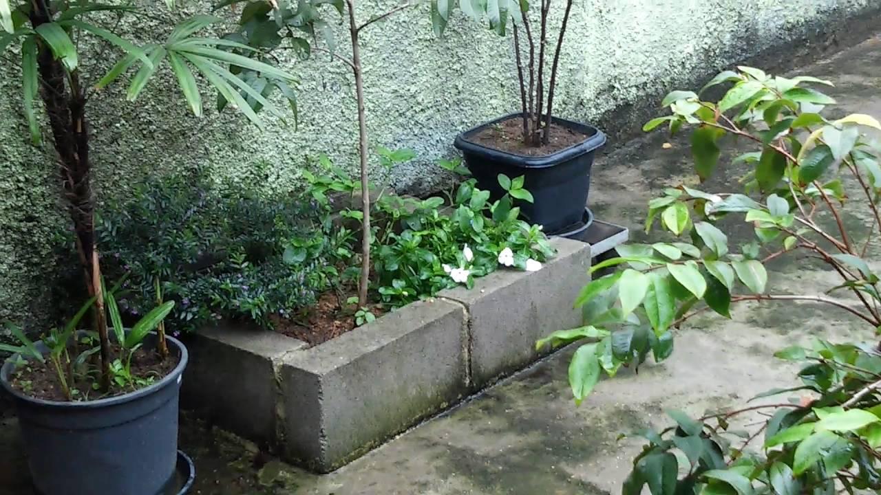 Quintal pequeno com plantas youtube for Plantas para estanques pequenos