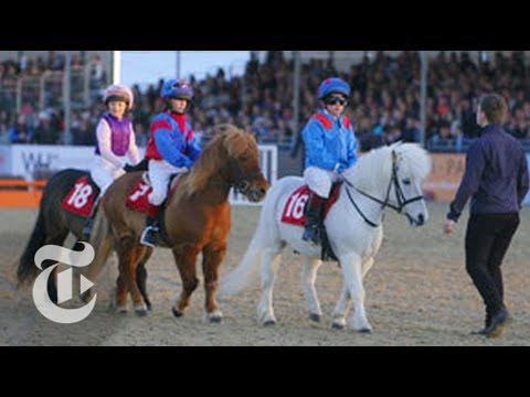 Shetland Pony Grand National | Op-Docs | The New York Times