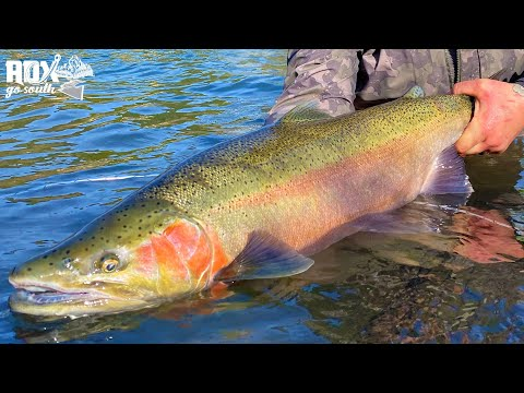 Oregon Steelhead Fishing ADVENTURE! (Adx Go South Ep. #1)