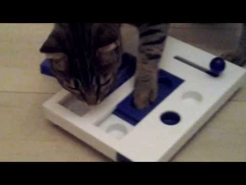 Ocicat playing with Cat Activity Brain Mover Board