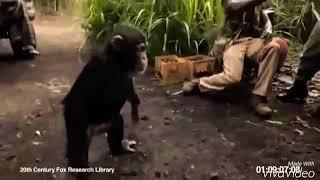 Baixar Macaco 🦍 que tiro Foi esse ?
