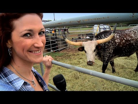 Texas Stampede Longhorn Cattle Drive