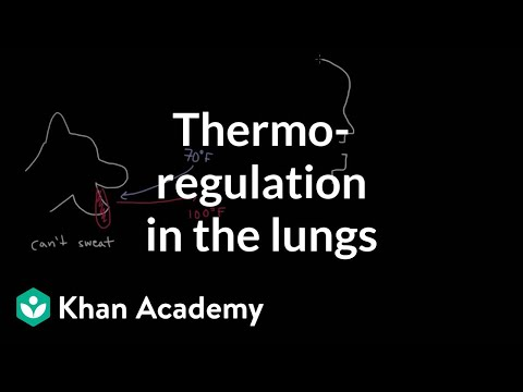 Thermoregulation in the lungs | Respiratory system physiology | NCLEX-RN | Khan Academy