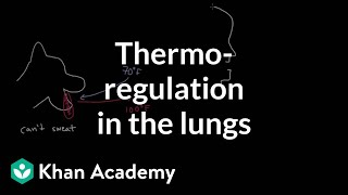 Themoregulation in the lungs