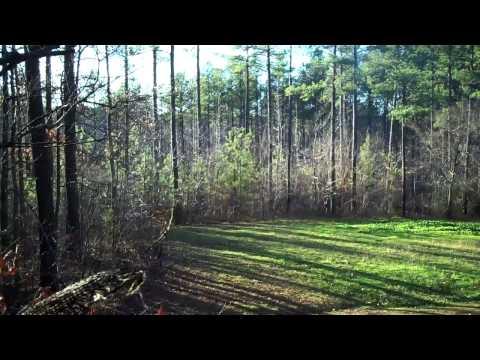Club Evening Deer Hunt Late Season In NC