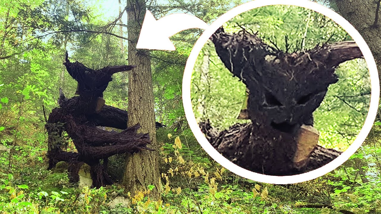 Creepiest Trees in the World!